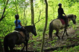 Gdynia Atrakcja Jazda konna Ośrodek konny Adventure Park Kolibki